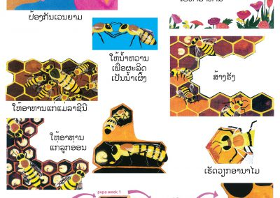 Bee work-01(1)